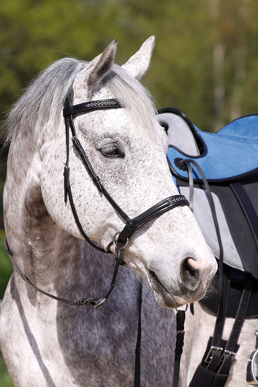 Caldene Leather Horse Bridle Headpiece 3 sizes 2 colours